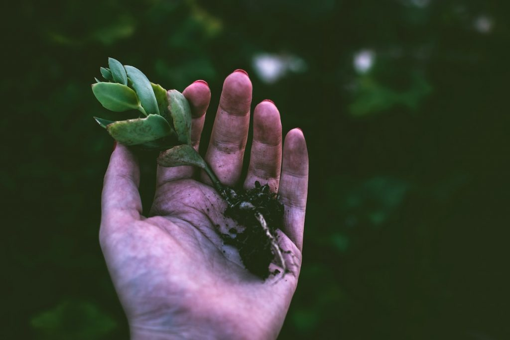 person holding a small green plant